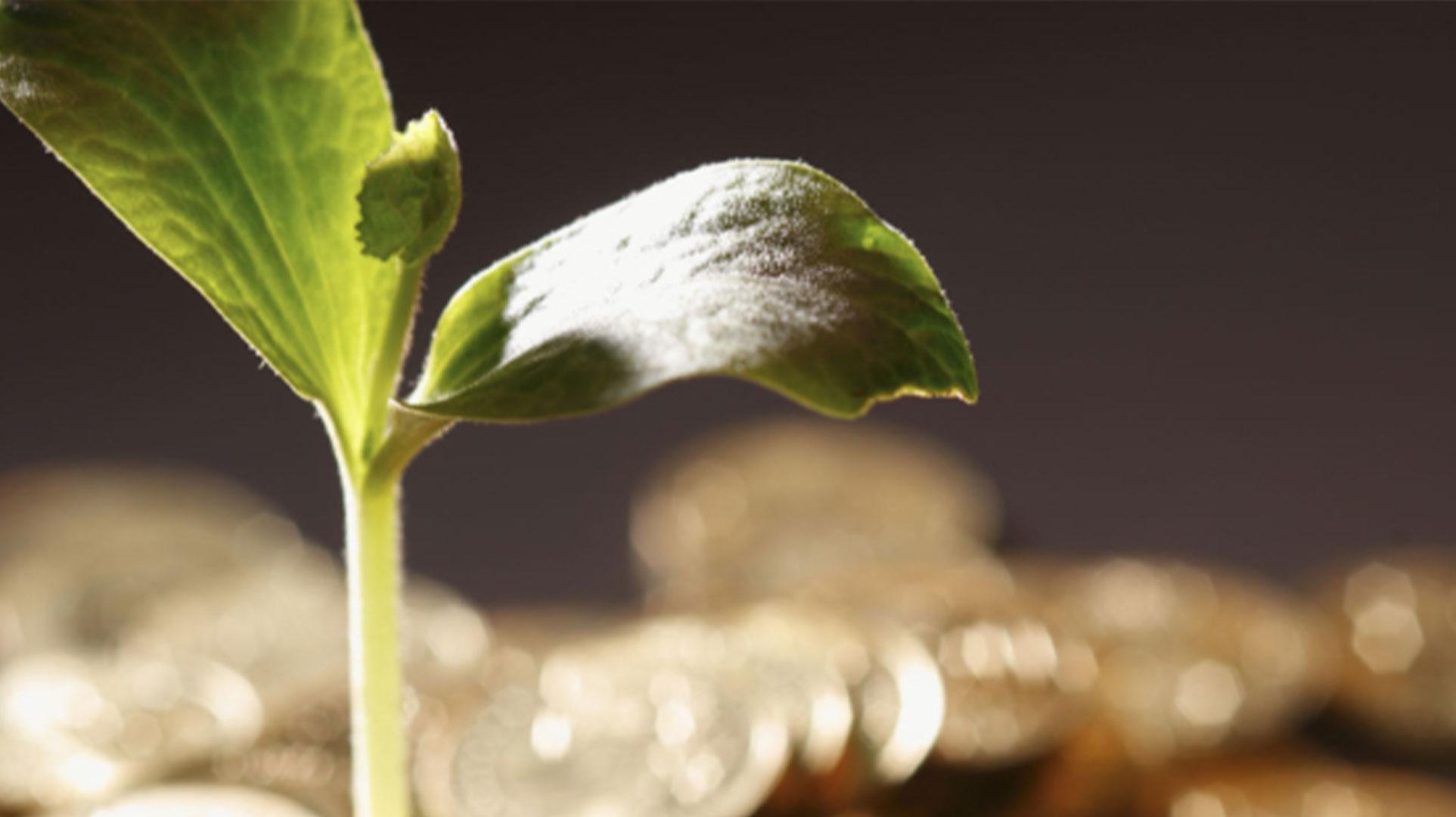 représentation d'une plante qui pousse avec de l'argent en fond